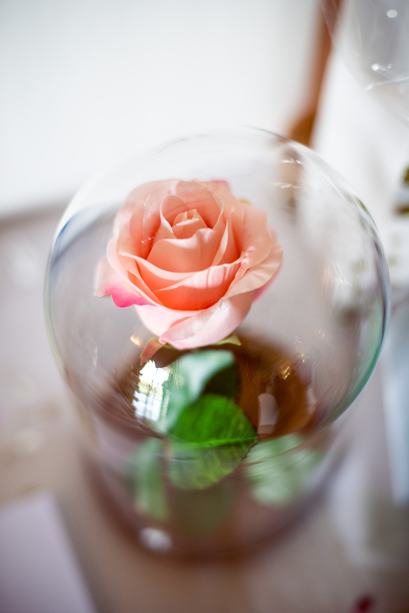 They had this rose in a glass dome bell jar just like the one from Beauty & the Beast which Carley loves. -