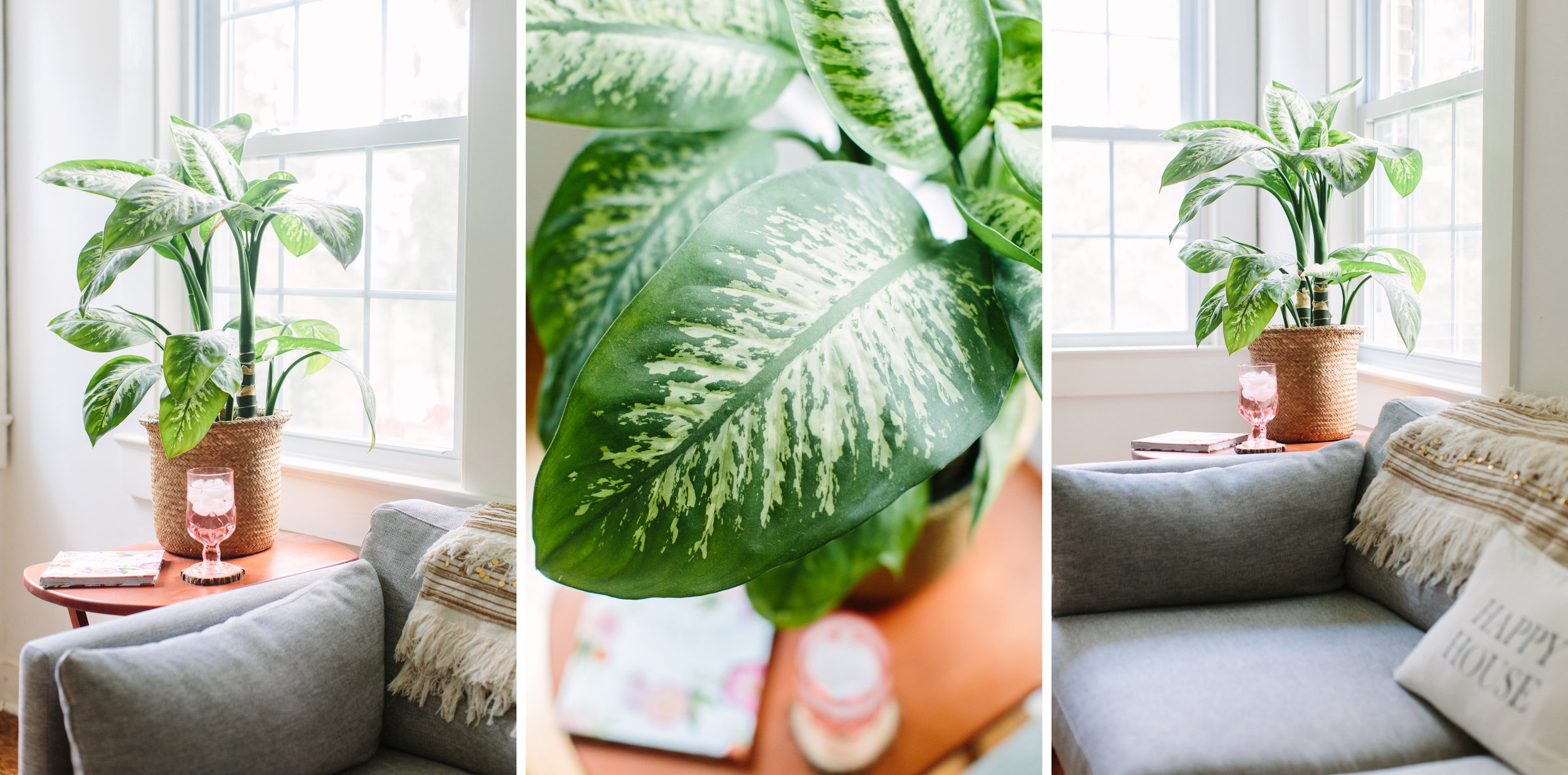 Low Maintenance House Plantsbusiness, self, personal, photographer, tips, lifestyle, indoor, ideas, creative, at home, light and airy, natural light, photoshoot, inspiration, plant mom, plants, hard to kill