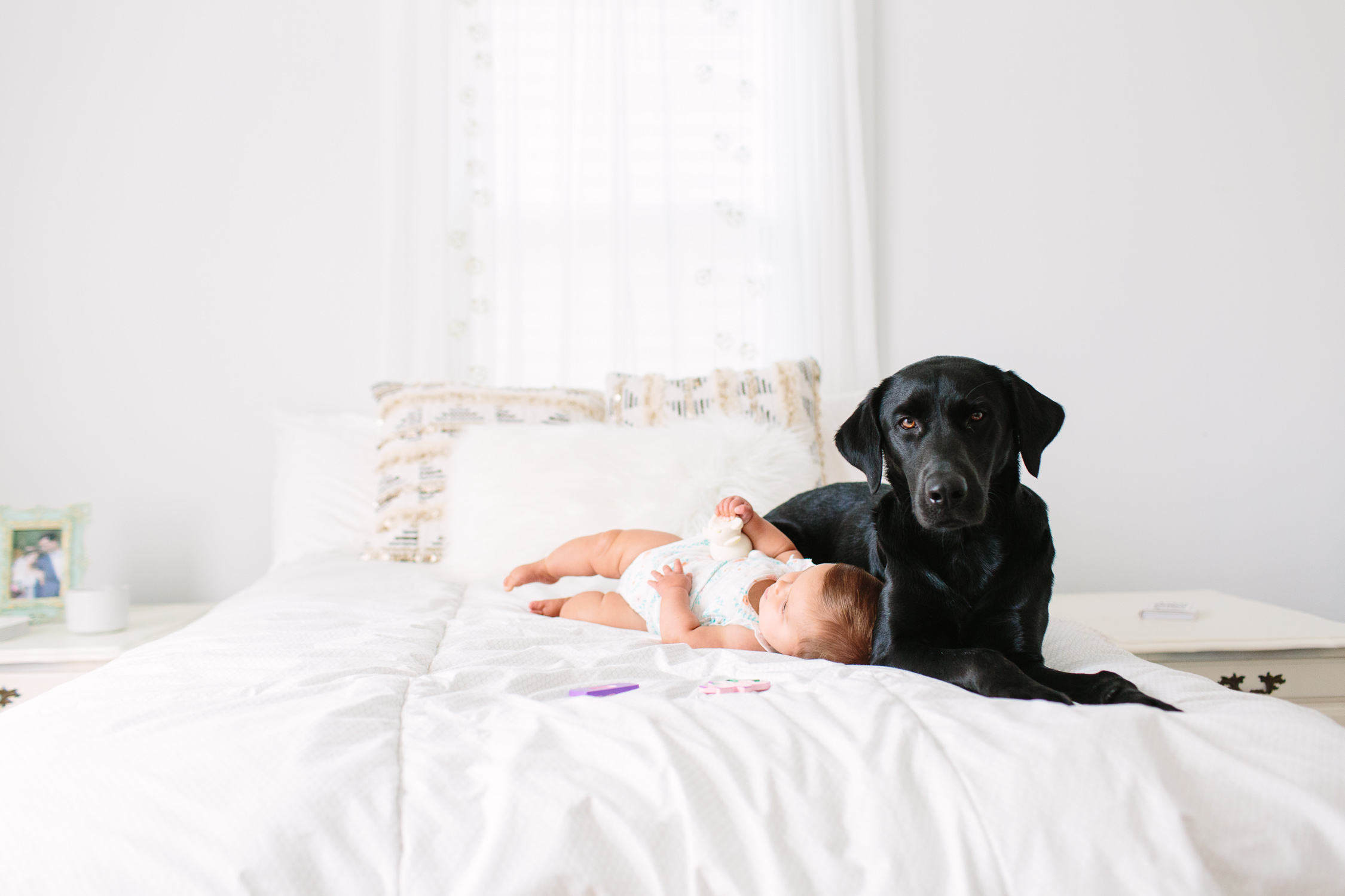 Puppy Before Baby // Knoxville Photographer family, business, personal, photographer, tips, baby, lifestyle, newborn, indoor, ideas, kids, creative, mom, at home, light and airy, natural light, photoshoot, inspiration, dog, bedroom, in home