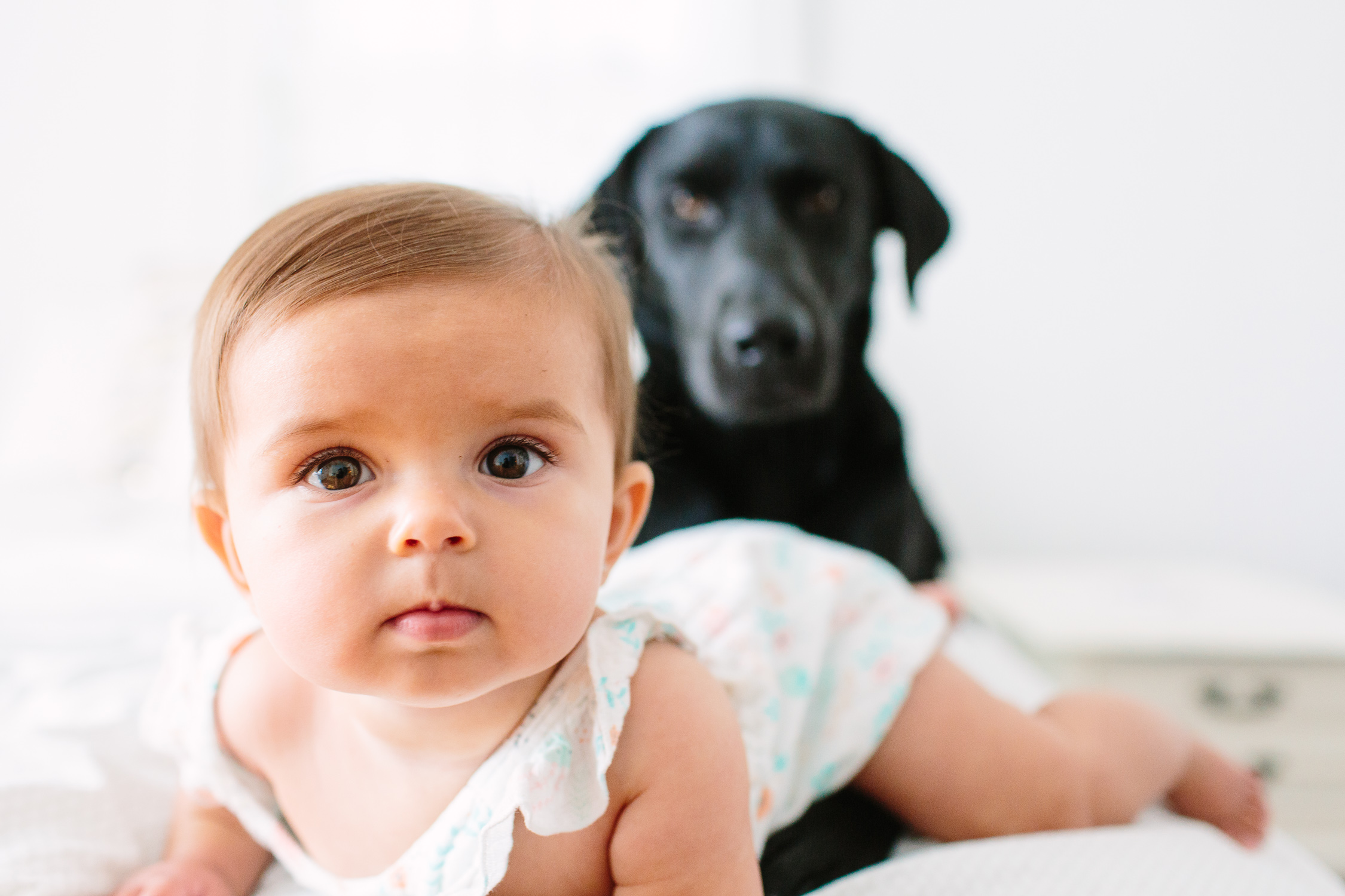 Puppy Before Baby? // Knoxville Photographer family, business, personal, photographer, tips, baby, lifestyle, newborn, indoor, ideas, kids, creative, mom, at home, light and airy, natural light, photoshoot, inspiration, dog, bedroom, in home