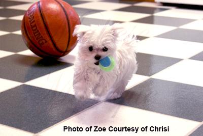 Zoe playing fetch Chrisi.jpg