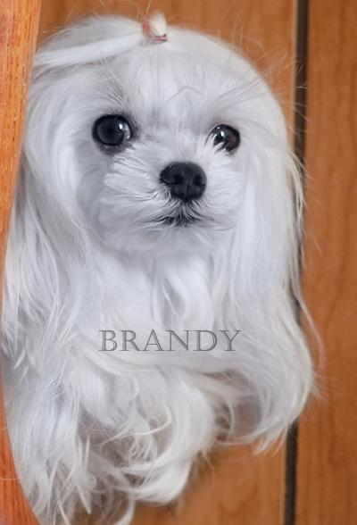 Brandy peeks.jpg