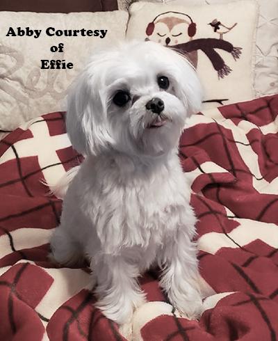 Abby-4.jpg
