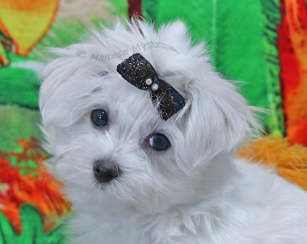 Buster Cute!7.jpg