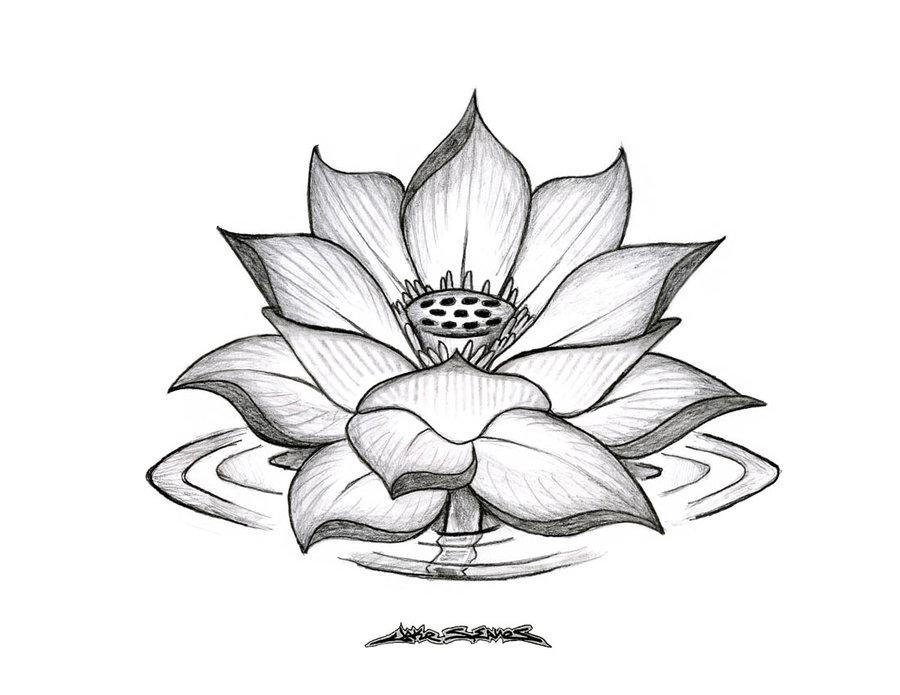 lotus_flower_by_muddygreen.jpg