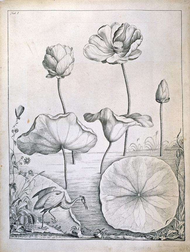 Lotus & Heron.jpg
