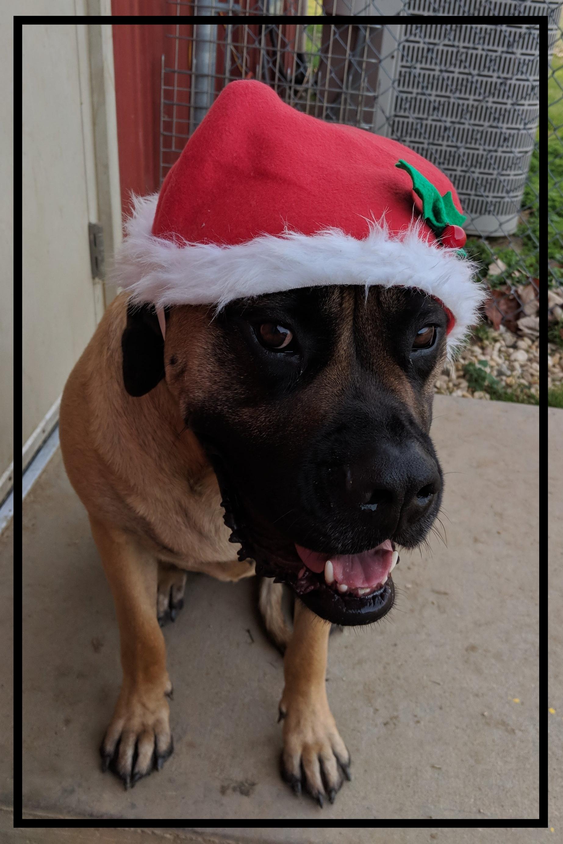 christmas Max.jpg
