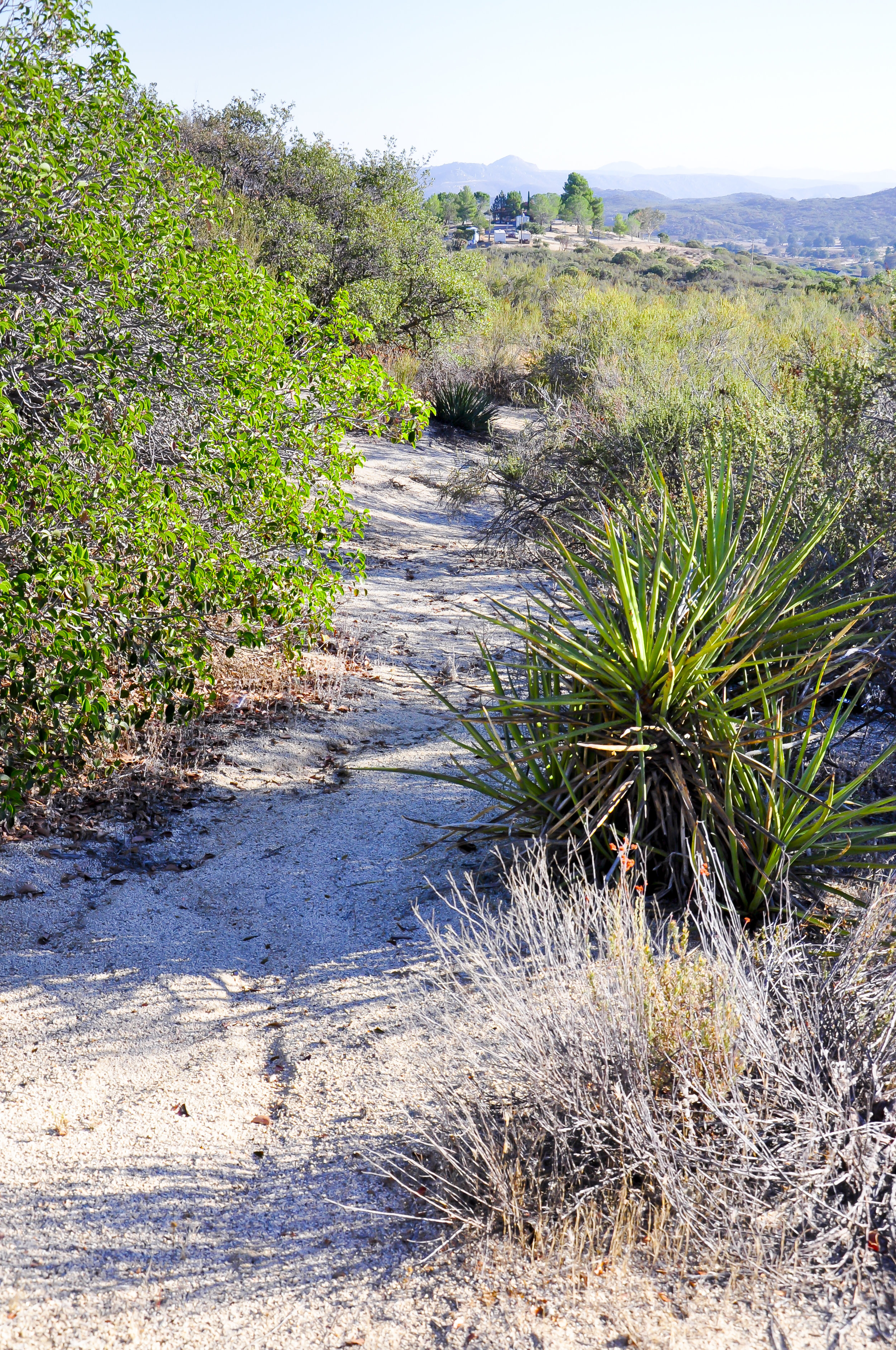 The path to recovery begins at Freedom Ranch.