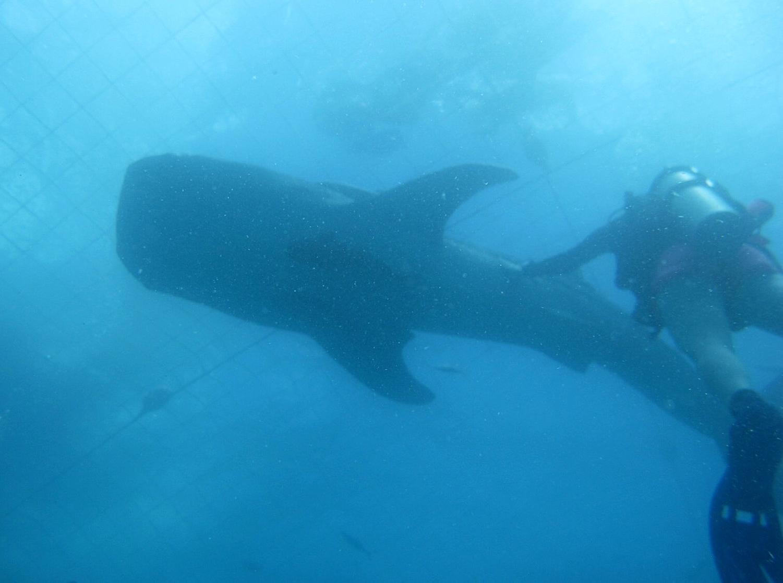 Stephanie and Whaleshark
