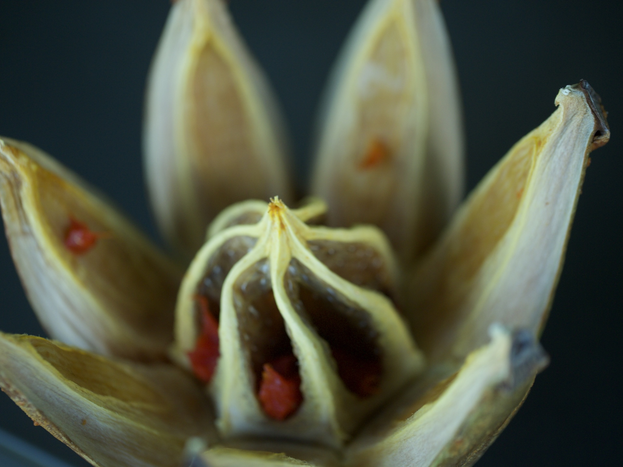 Seed Pod Macro
