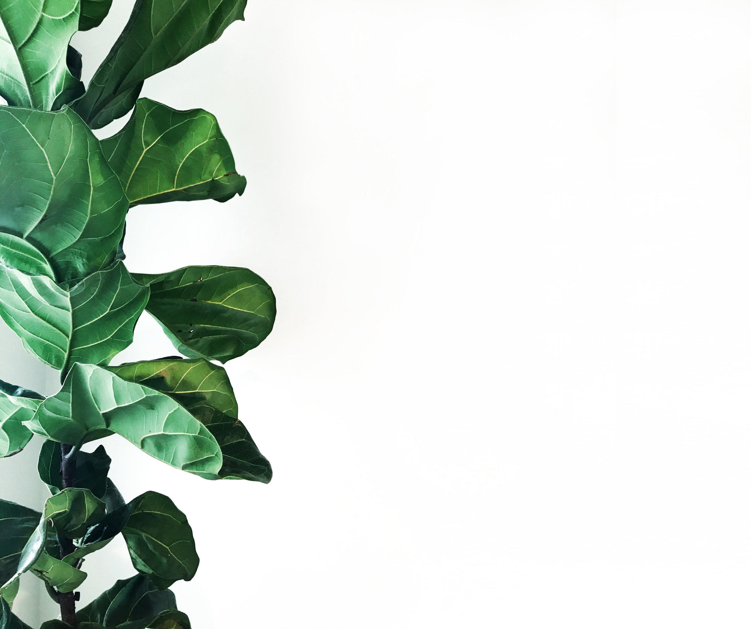 tree copy 2.jpg