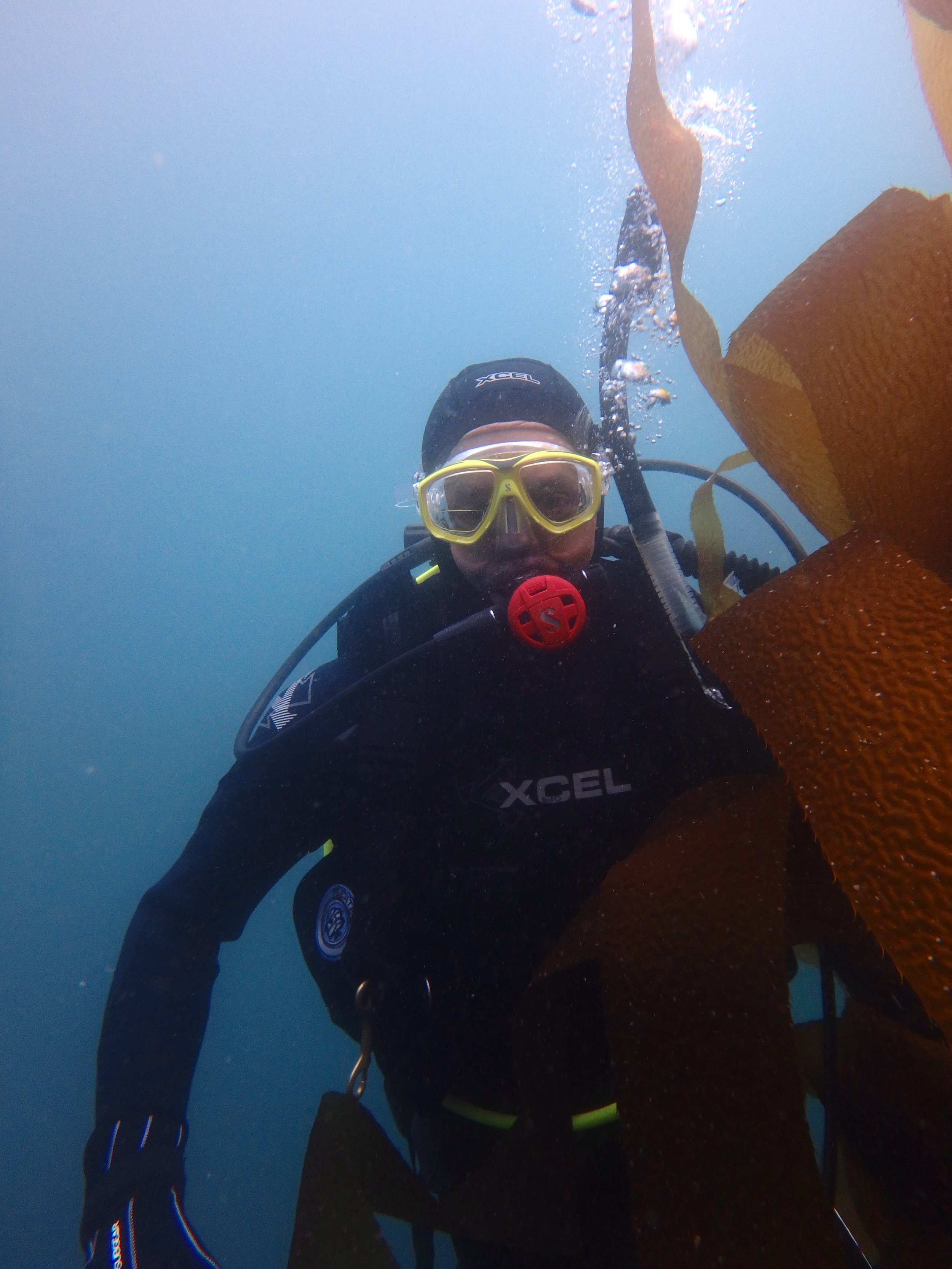 Diving off the Channel Islands