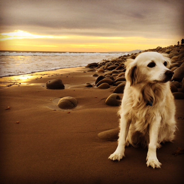 Carolyn's dog -- Sophia