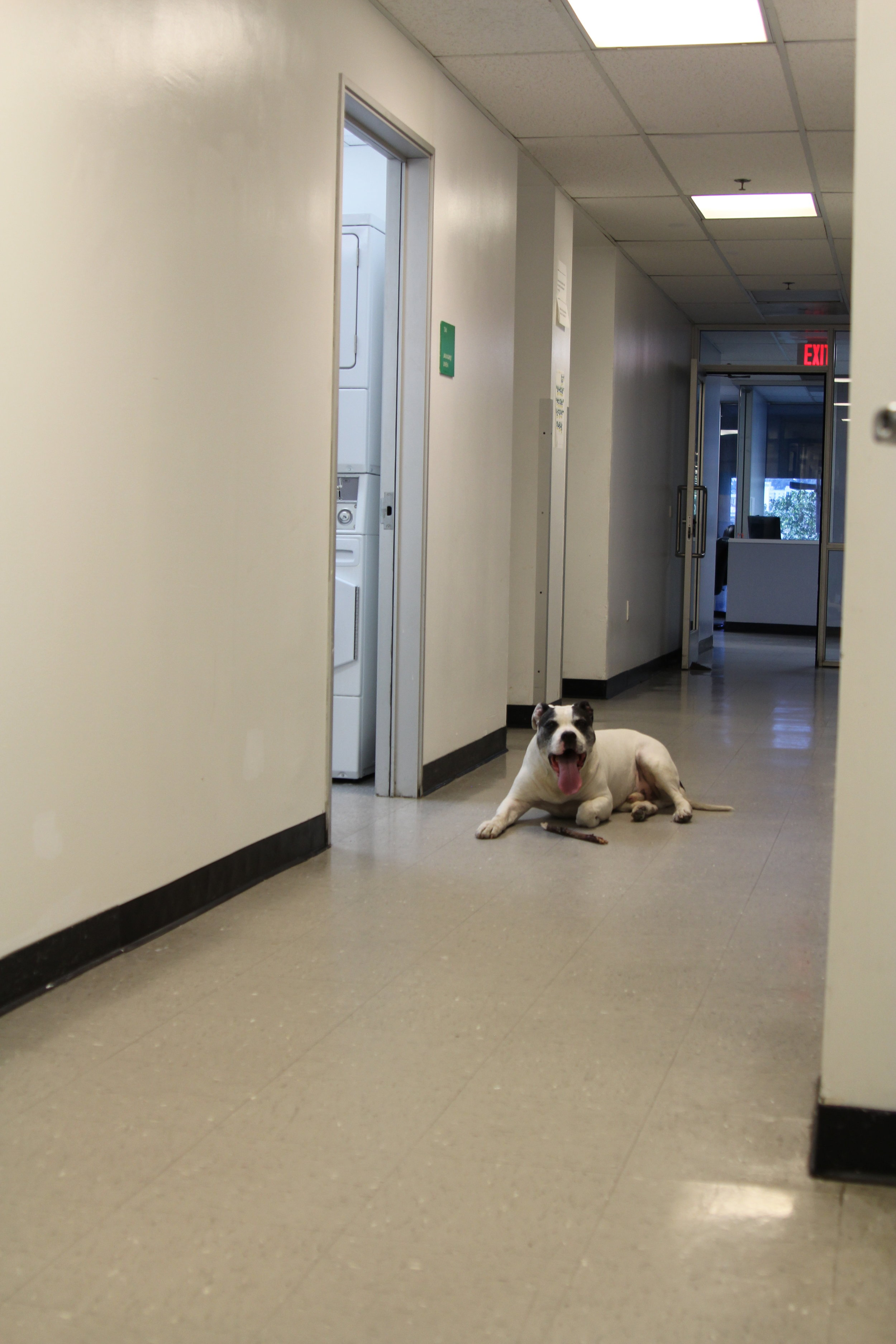 A PATH shelter resident's dog happily munching on a stick outside the laundry room.