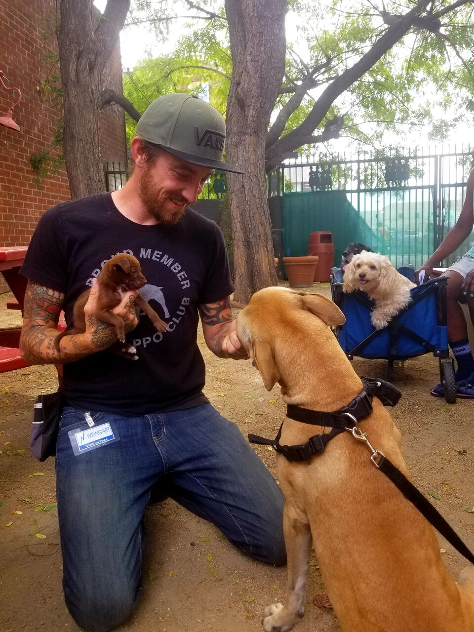 Dog trainer Steffen Baldwin, our newest My Dog is My Home volunteer, at work with Weingart Center's shelter residents and their dogs.