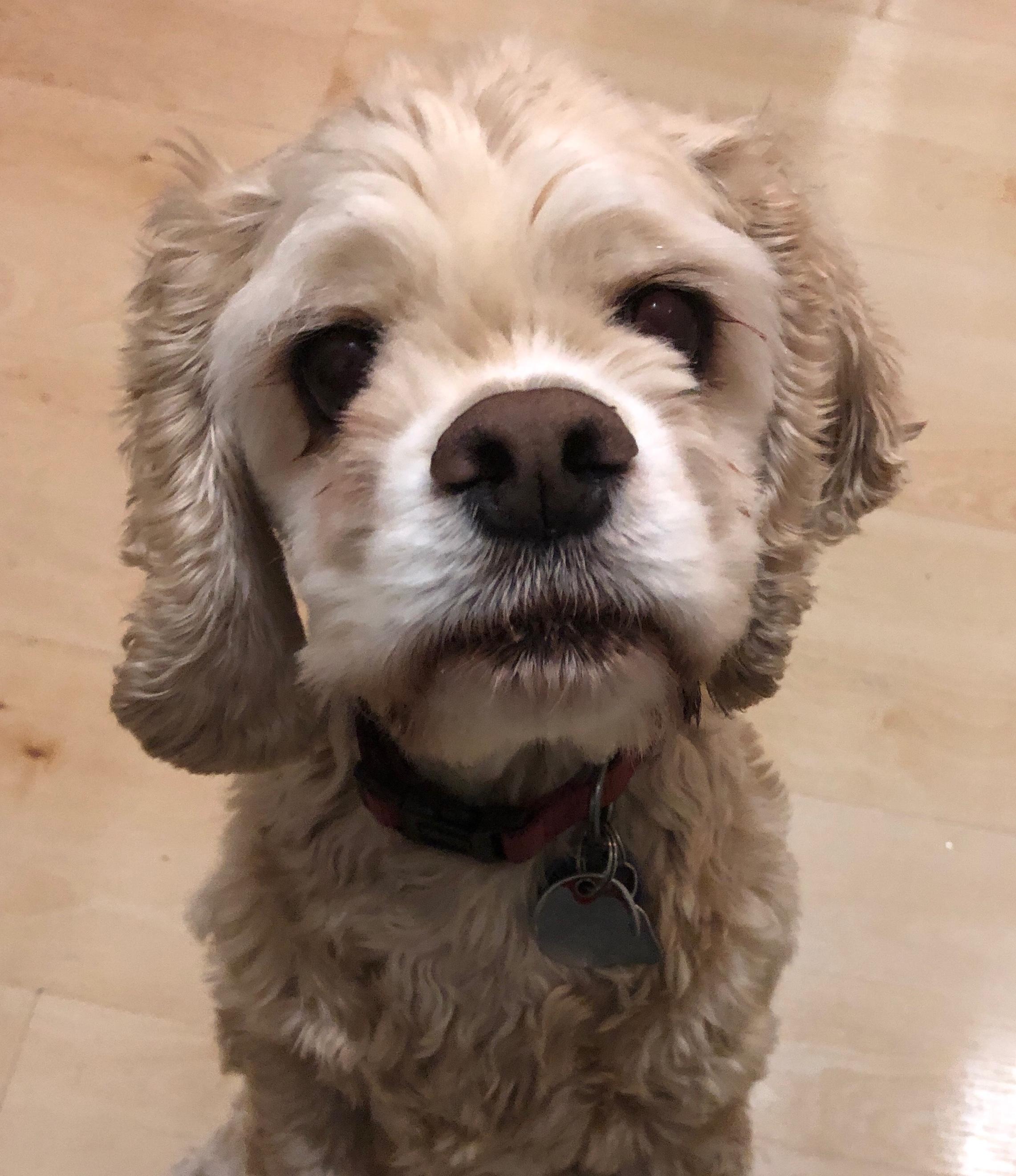 Steven's Dog -- Min-li