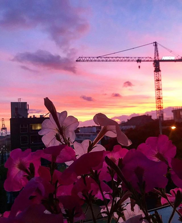 💖Stunning sunrise by @caileanp  #thestatesmanapartments #aucklandcity #sunrise #citylife #cityscape #crane #auckland #newzealand #nz #theweekbeforechristmas