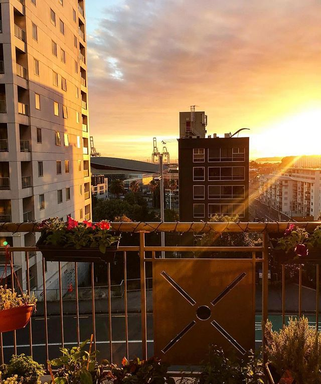 Stunning sunrise view from The Statesman apartments. Photo by @caileanp  #sunrise #aucklandcity #apartmentlife #citylife #nz #thestatesman #newzealand #thestatesmanapartments