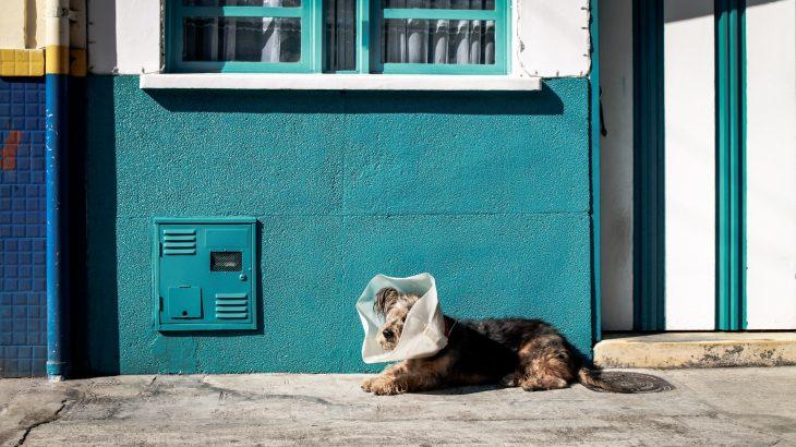 dog on wall.jpg