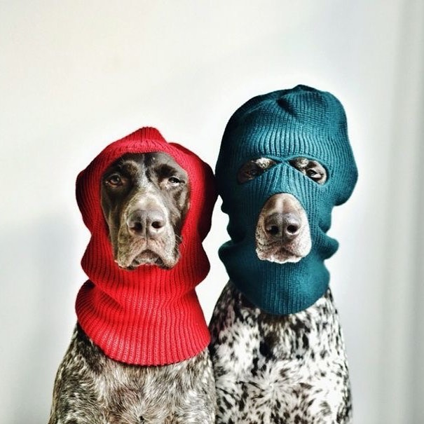 """For our friends in cold places.  A great way to warm dogs up is adding a small amount of turmeric to their food (1/4-1.5 tsp per dog, small dose for small dog, big dose for big dog!) and some fresh ginger tea (cooled to lukewarm, 1/2 cup mixed with food). Although clinical studies are currently lacking in dogs, both herbs are showing promise as being anticancer in dogs in preclinical studies.  Caution use of turmeric in hot dogs who pant a lot and avoid sun/heat and dog's who may be """"hot headed"""" (reactive)  For other great nutritional boosters check out some of my @lykapetfood blogs, the website (link in bio) as well as via @rodneyhabib (planet paws) 🐶💚🌱☀️ Photo courtesy: Steph McCombie 🙏🏻🙏🏻 #winter #dogsofsydney #vetsofinstagram #herbalife #holisticvet #doglover #turmeric #ginger"""