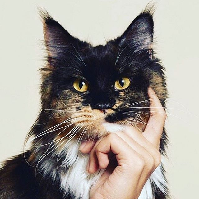 Wondering what health challenges pet guardians are having with their pets?  Comment below and ill see if I can come up with some solutions for you 🐶😻💡✍🏼 #vet #veterinary #doglover #catlover #petcare