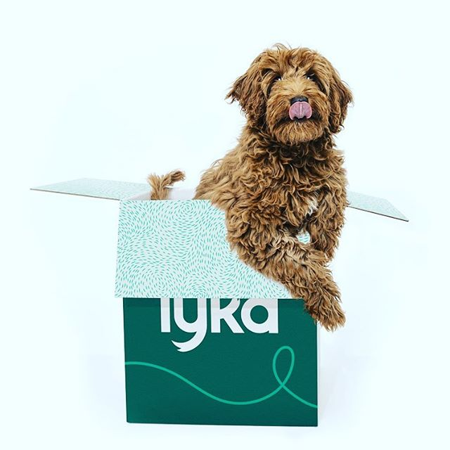 Congratulations Team Lyka @lykapetfood the new website looks awesome and recipes sounding delicious (link in bio)  Thanks for allowing me to part of this incredible step forward to allowing dogs to live their best lives on natural diets 🥦🐶💚 #lykapetfood #dogslivingtheirbestlives #naturalpetfood #holisticvet #naturalfeeding