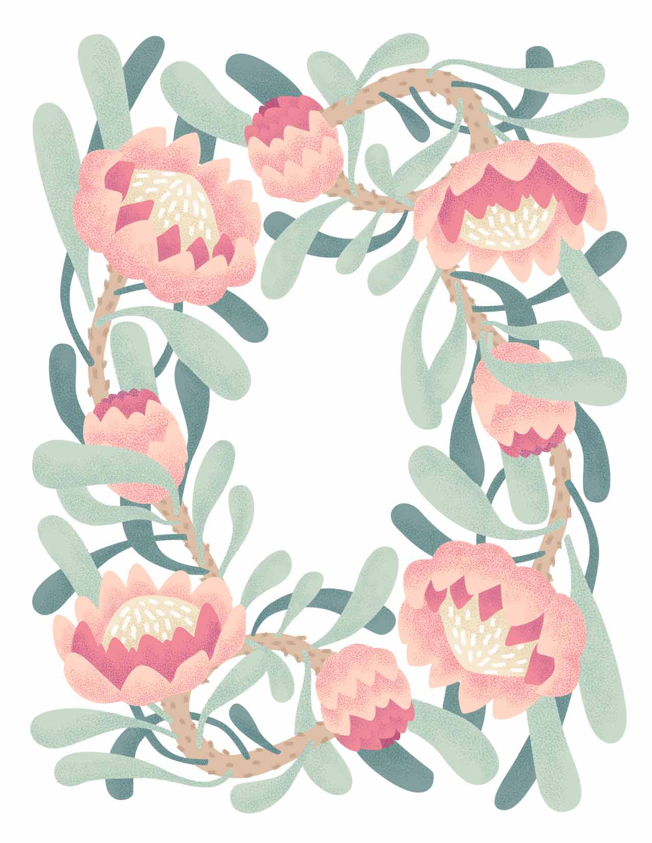 Pink Protea Illustration by Jessie Tyree Jenness