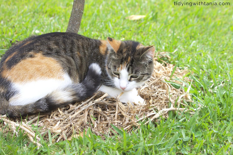 Twiggy, My little helper in the garden.