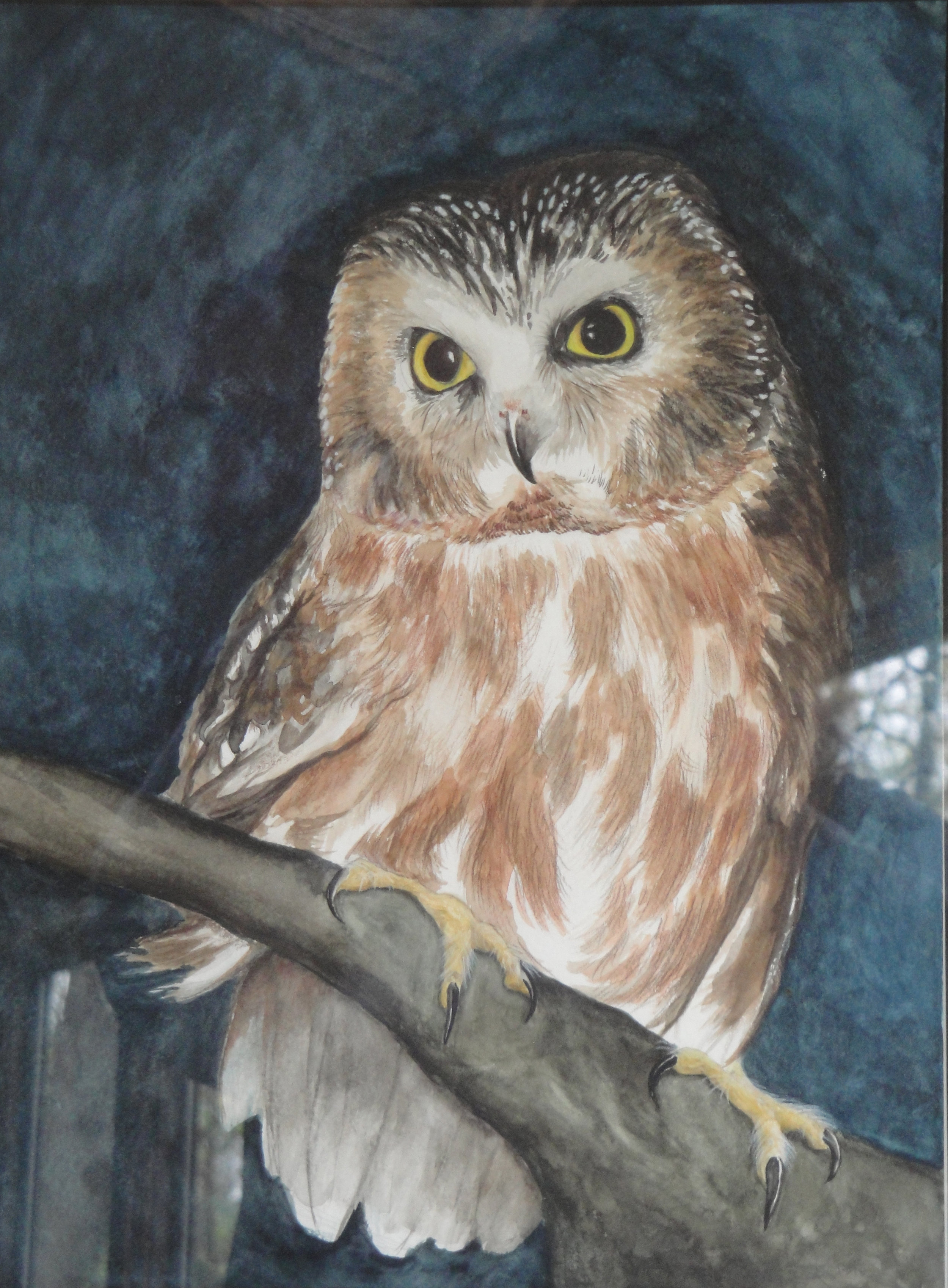 Saw-whet Owl . Watercolor Drawing on Cotton Rag.