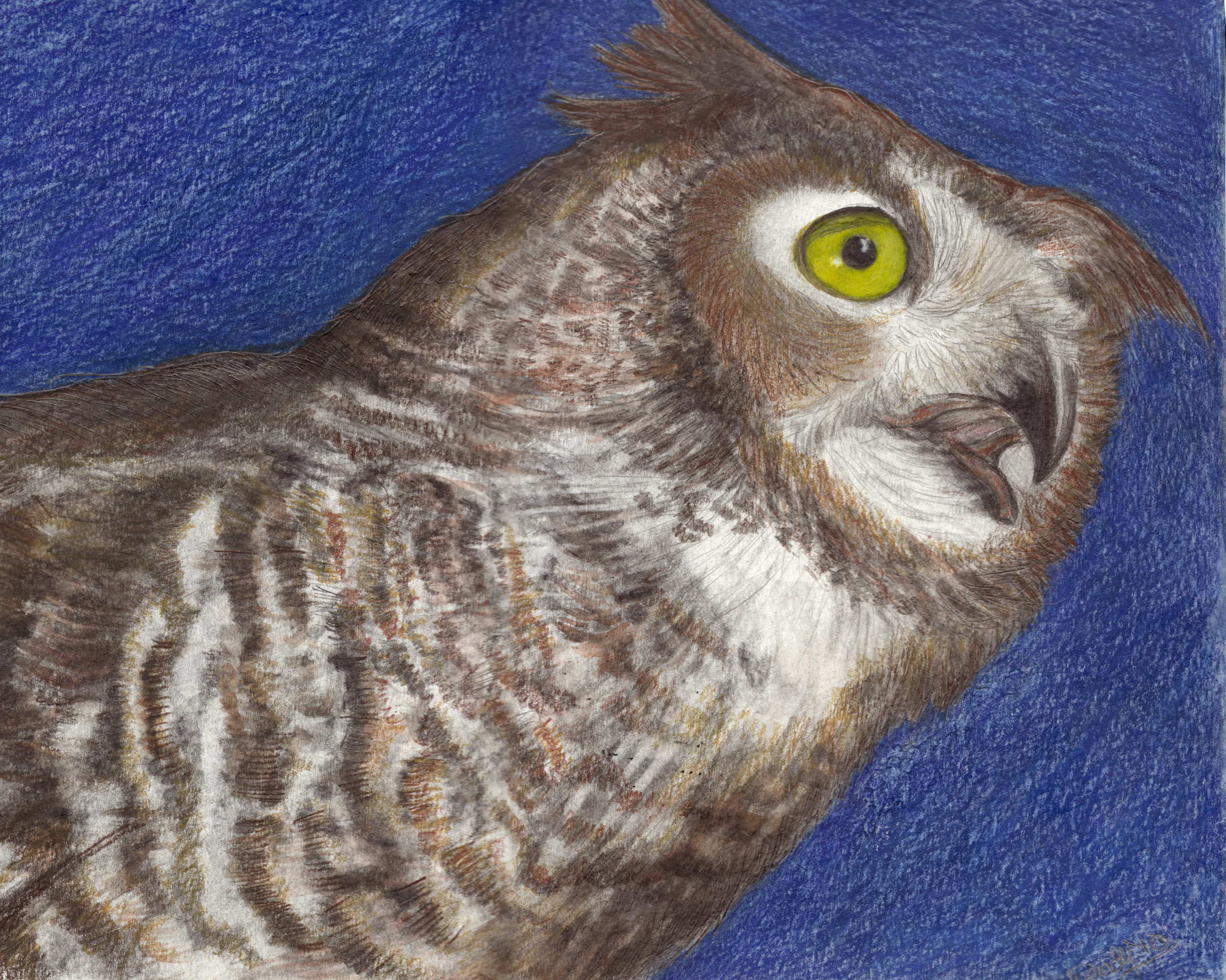 Evening Eyes  ~ Great Horned Owl. Watercolor Drawing on Cotton Rag