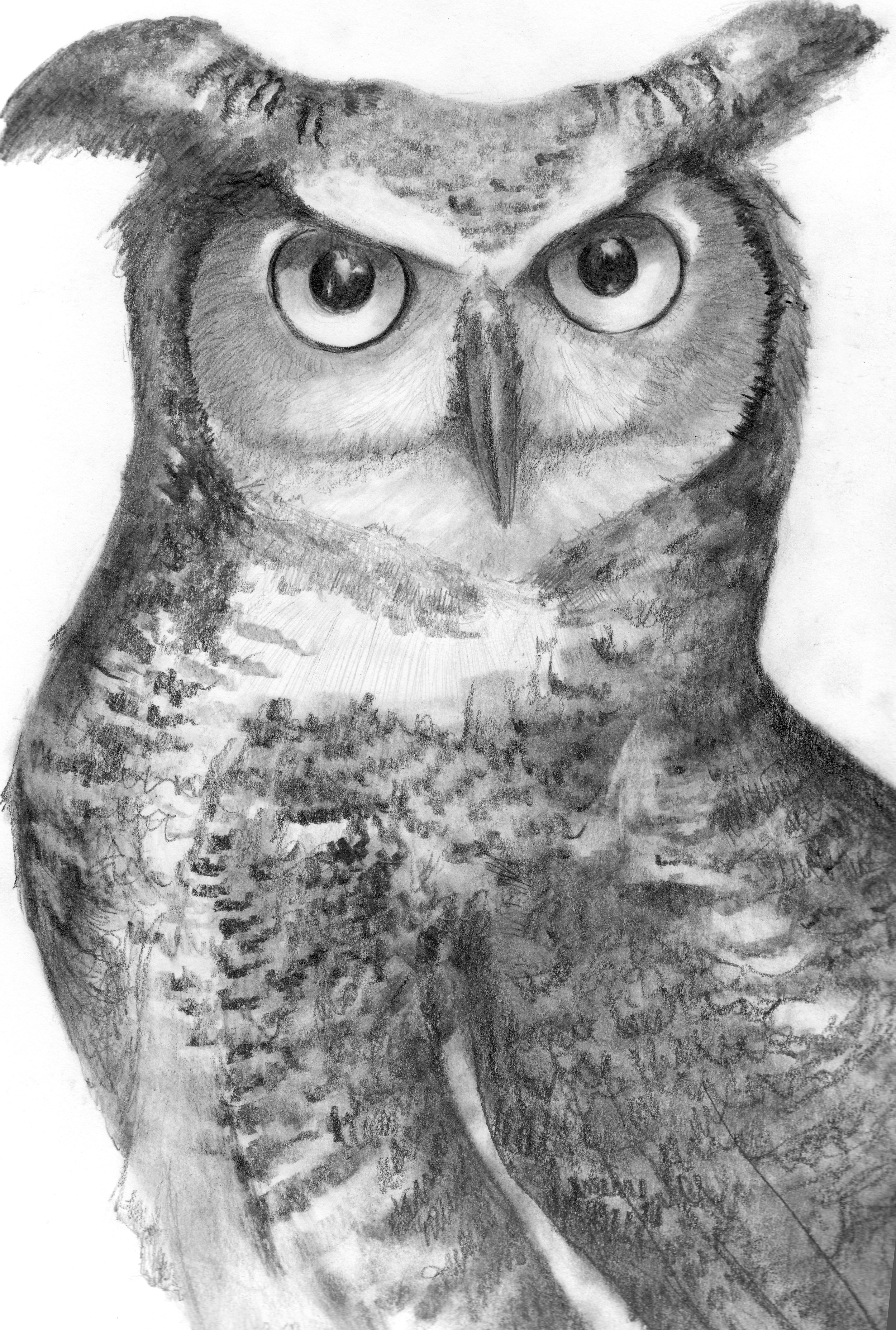 Who Are You Looking At?  ~ Great Horned Owl Graphite Pencil on Bristol Board