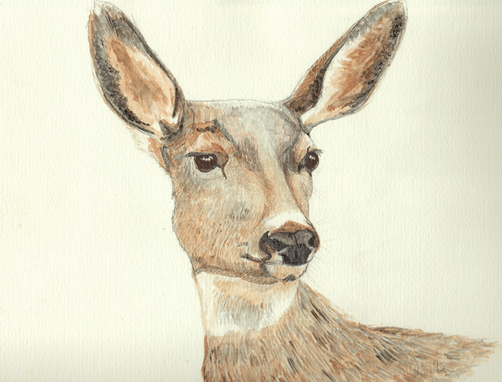 Soft Eyed Doe  ~ White Tailed Deer Watercolor Drawing on Watercolor Paper