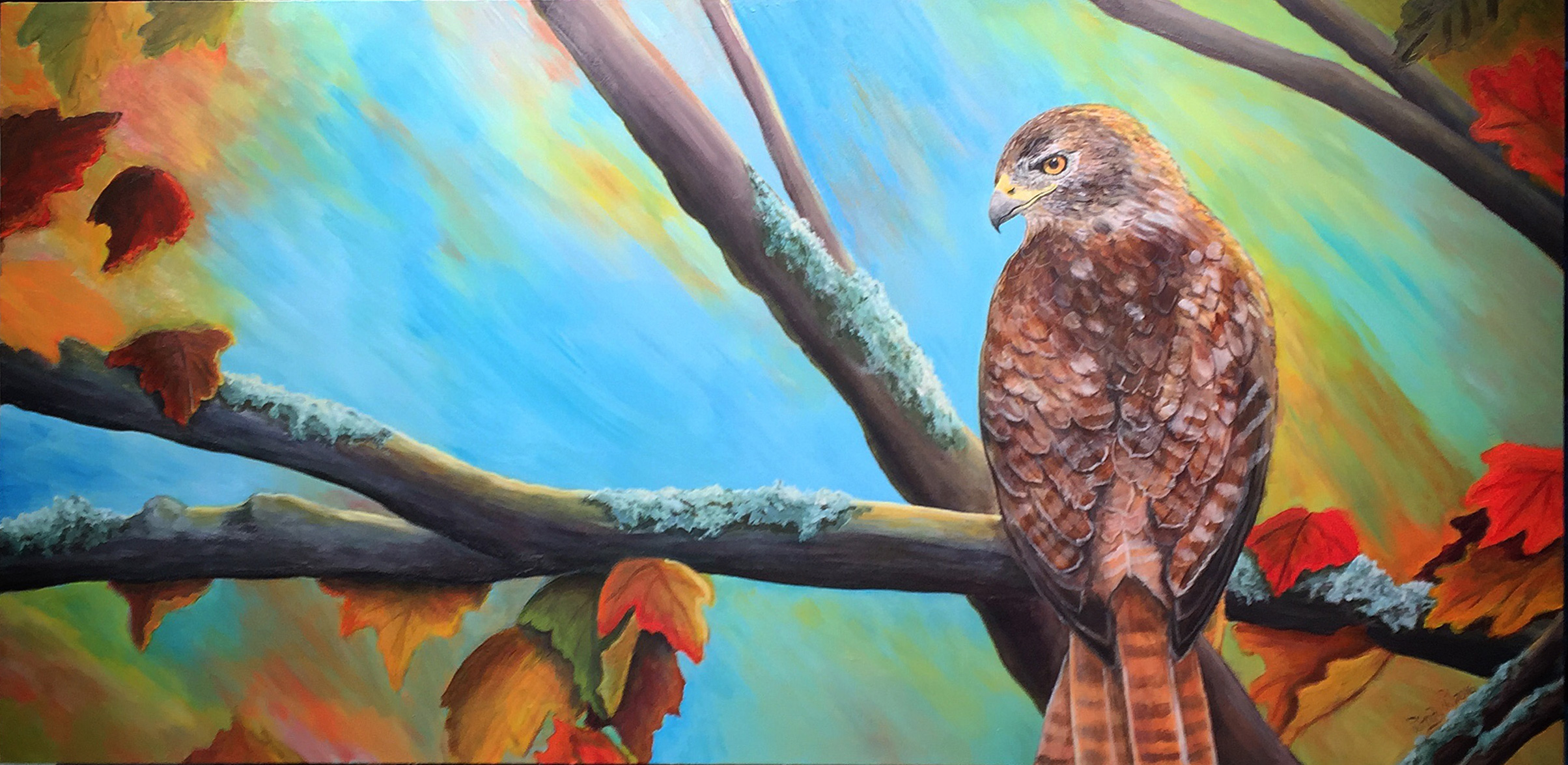 Sir Red Tail ~ Red Tailed Hawk Acrylic on Canvas