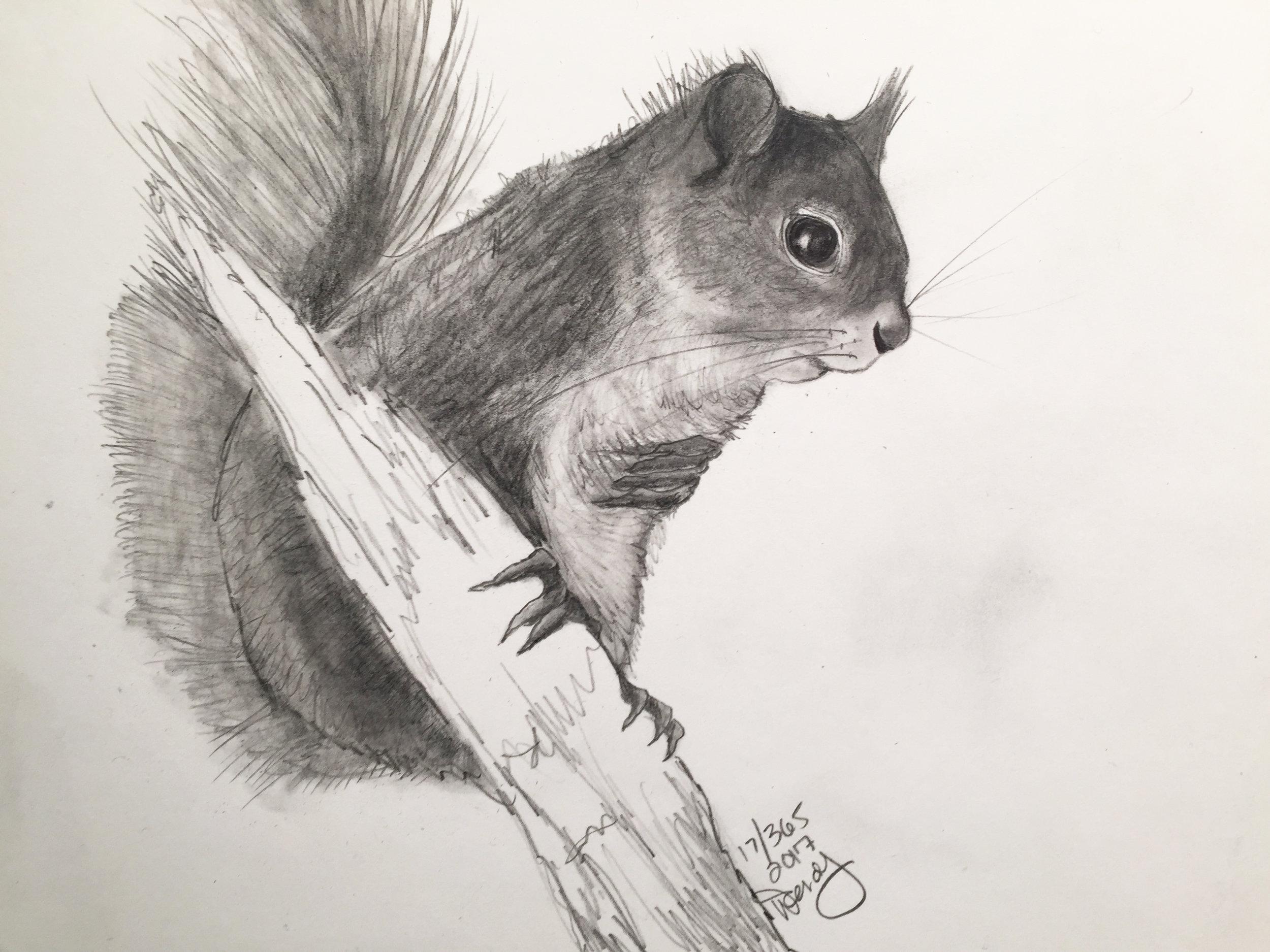 17-365-redsquirrel.JPG