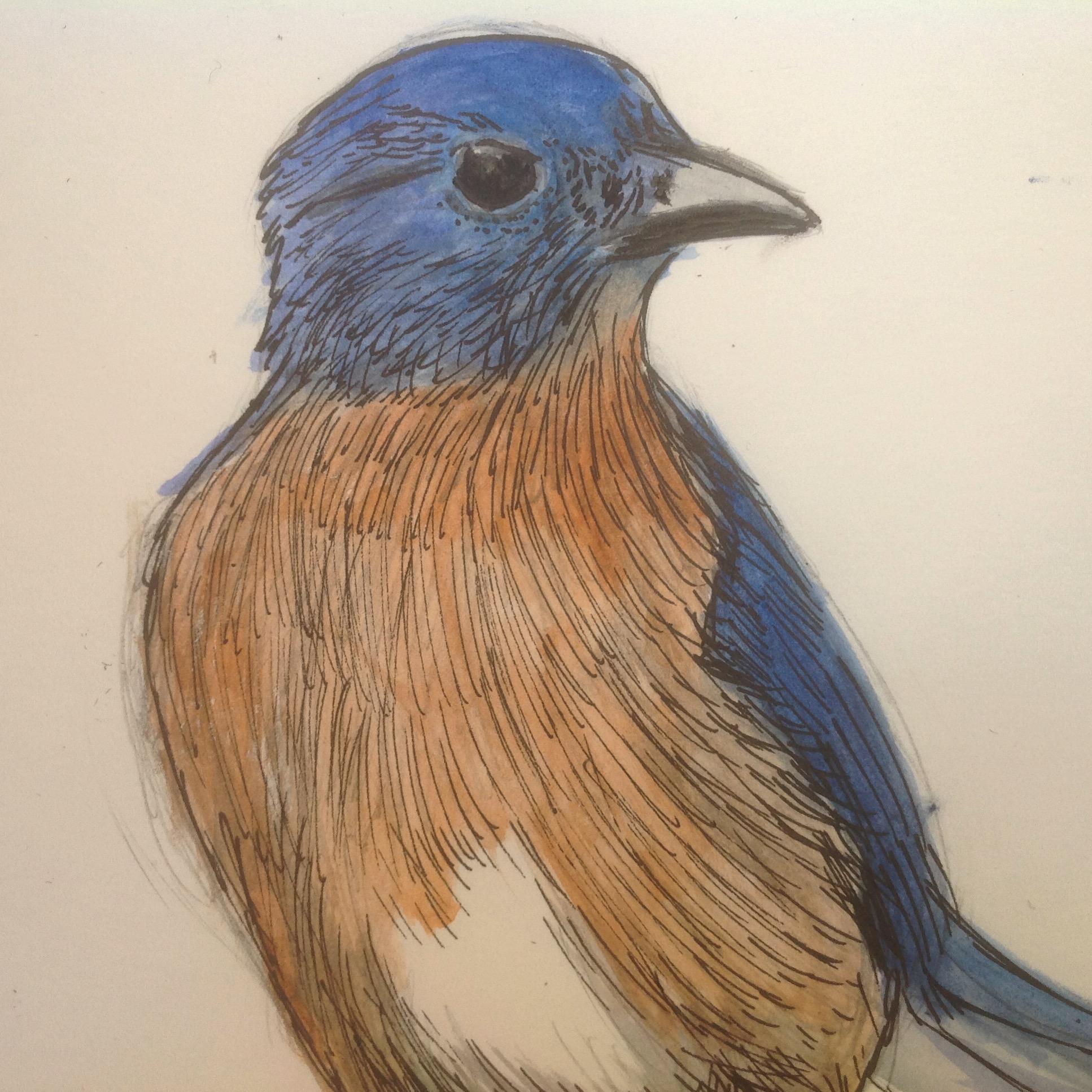 58-365 bluebird.JPG
