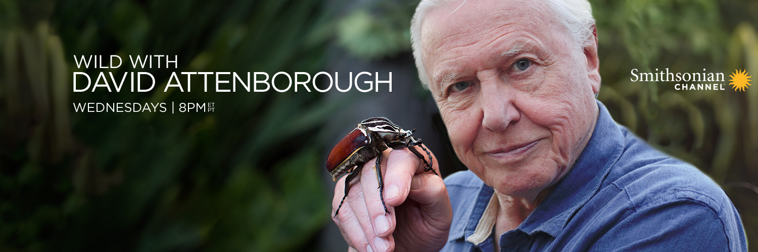 twitter_Wild_with_David_Attenborough_1500x500.jpg