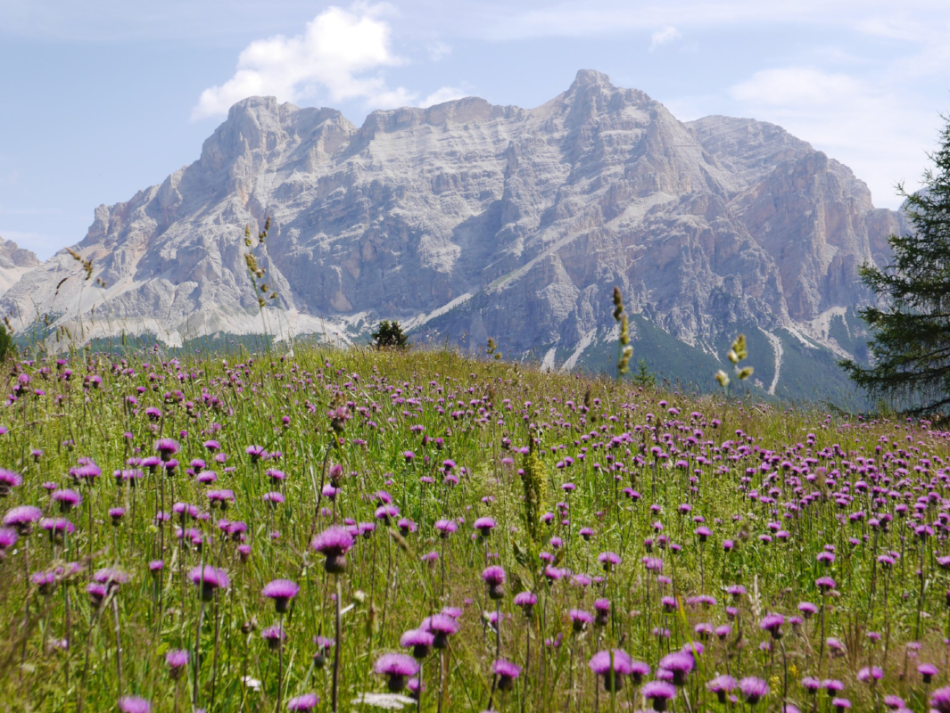 In 2009 the Dolomites were put on Unesco's list of world's protected natural paradises.