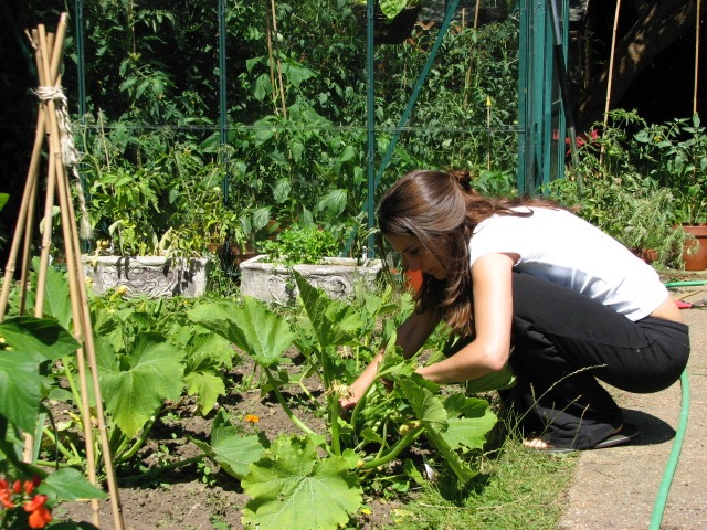 Me doing a little bit of courgette harvesting in our old house.
