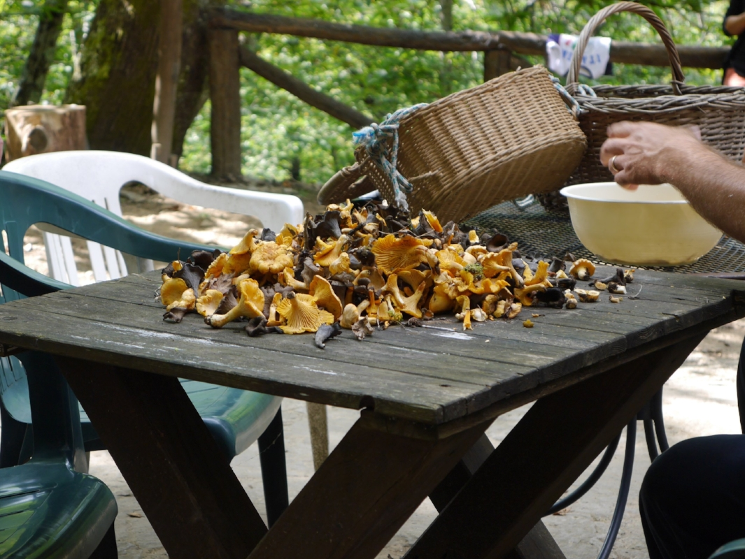 We went wild mushroom picking in Italy...what an experience!