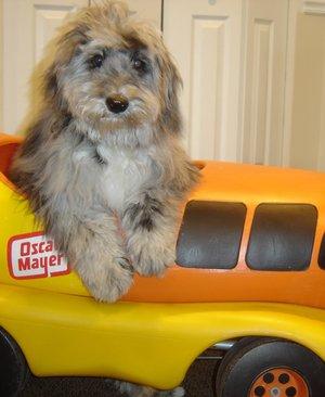 Chance, Office Wonder Dog