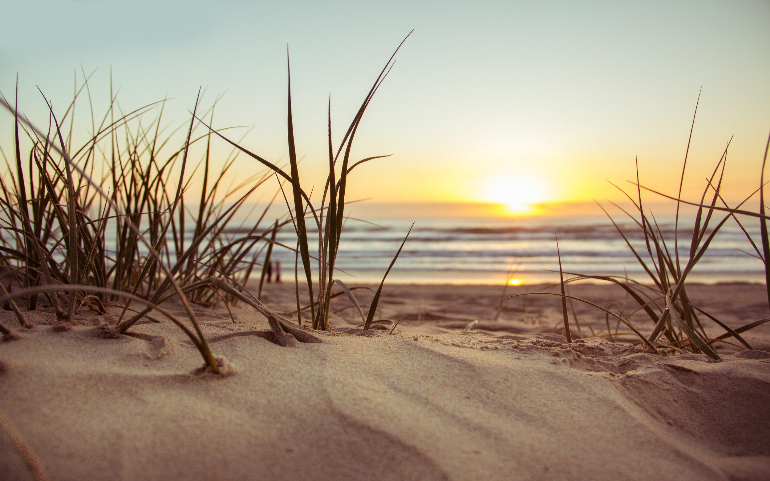 beach-golden-hour-grass-1192671.jpg