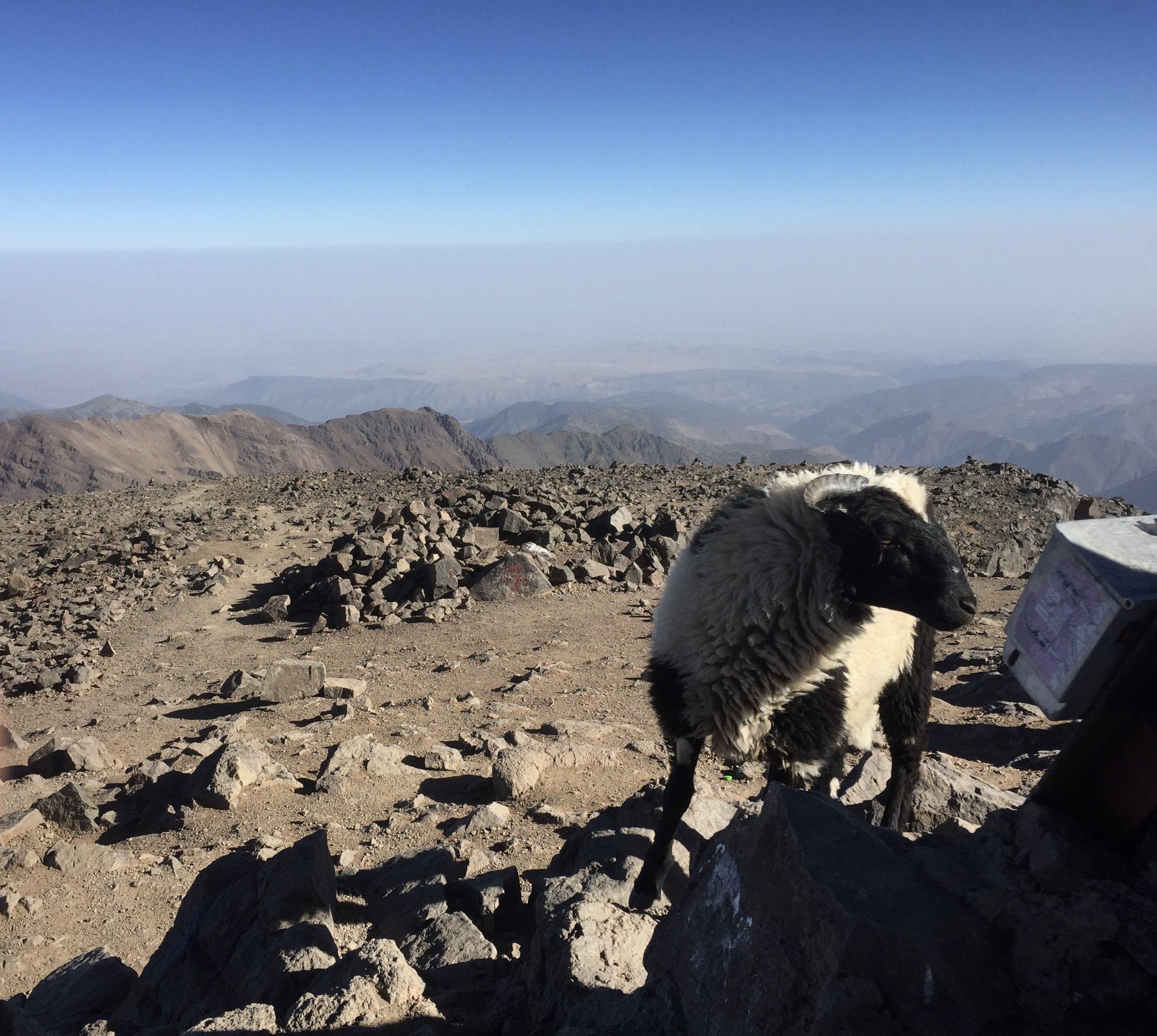 Morocco IV - Hiking Toubkal