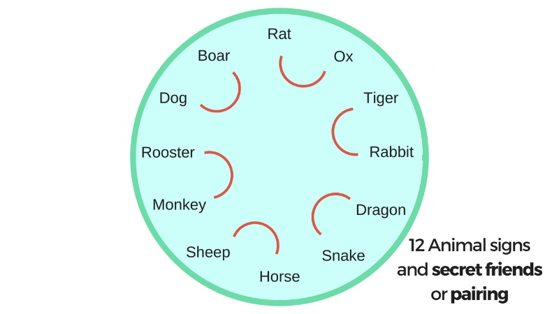12 animal secret friends.jpg