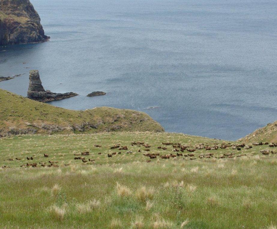 PIWS roaming the wild hills on Banks Peninsula