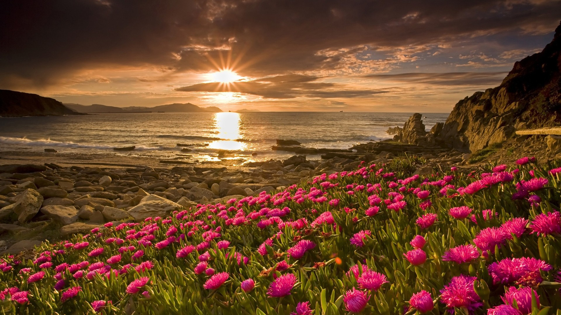 HD-Flowers-and-sunrise-nature-wallpaper