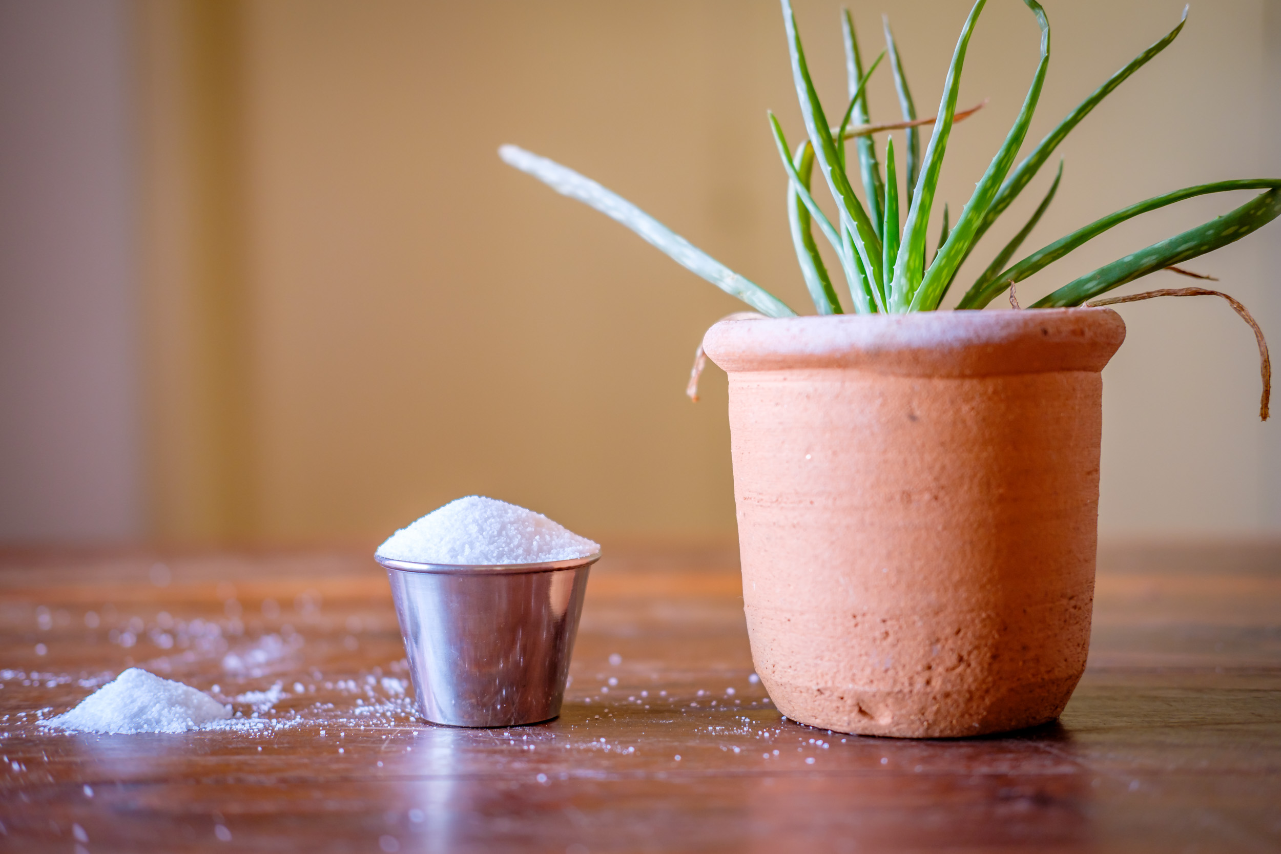That silver cup is all the salt necessary to chlorinate up to 10,000 gallons of water!