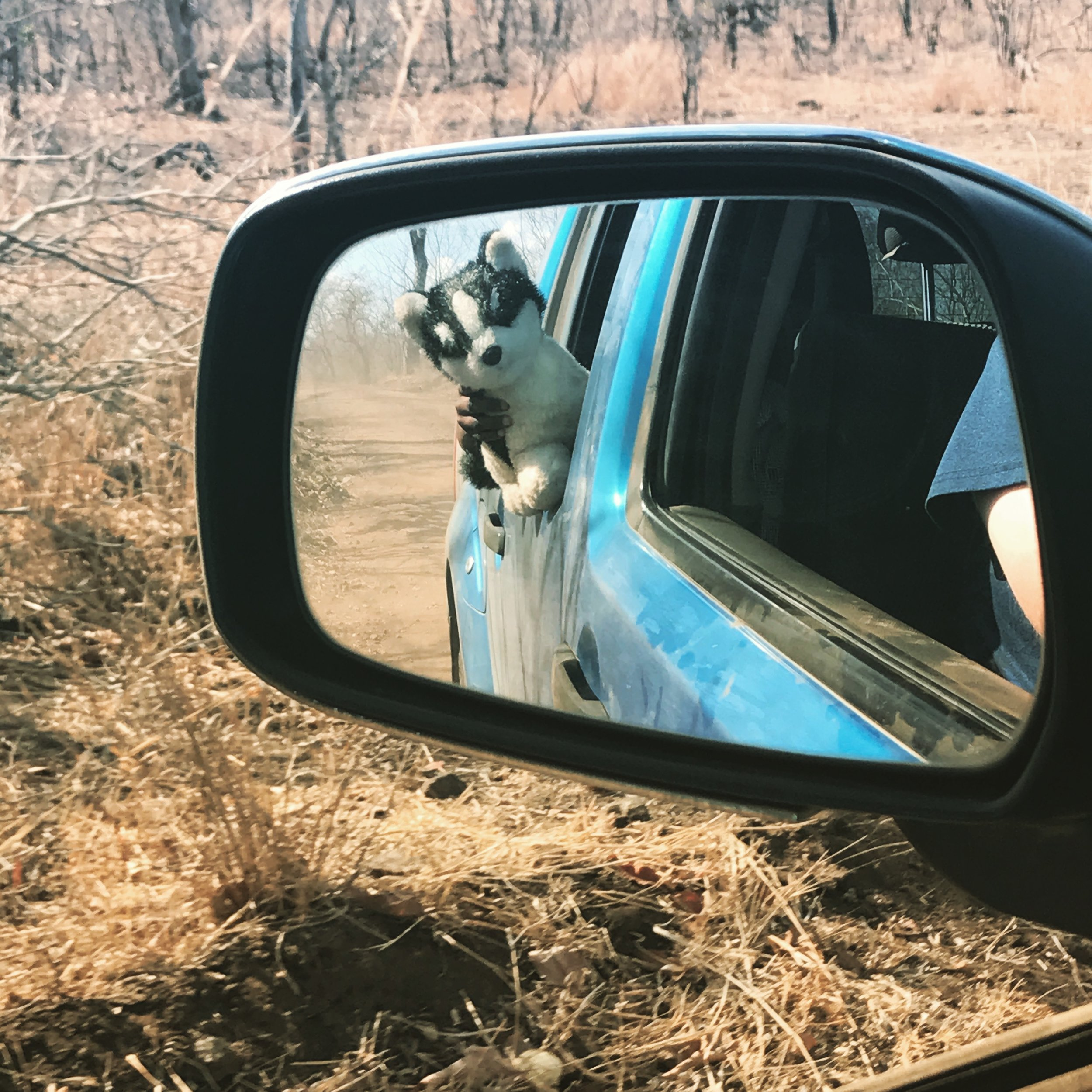 Timo didn't take this photo either; Jordan did! But Timo loved playing with JackJack the puppy and each time Jordan stuck his camera out the window I could see Timo slowly stretch JackJack out the window too so his reflection was in the mirror, haha!!