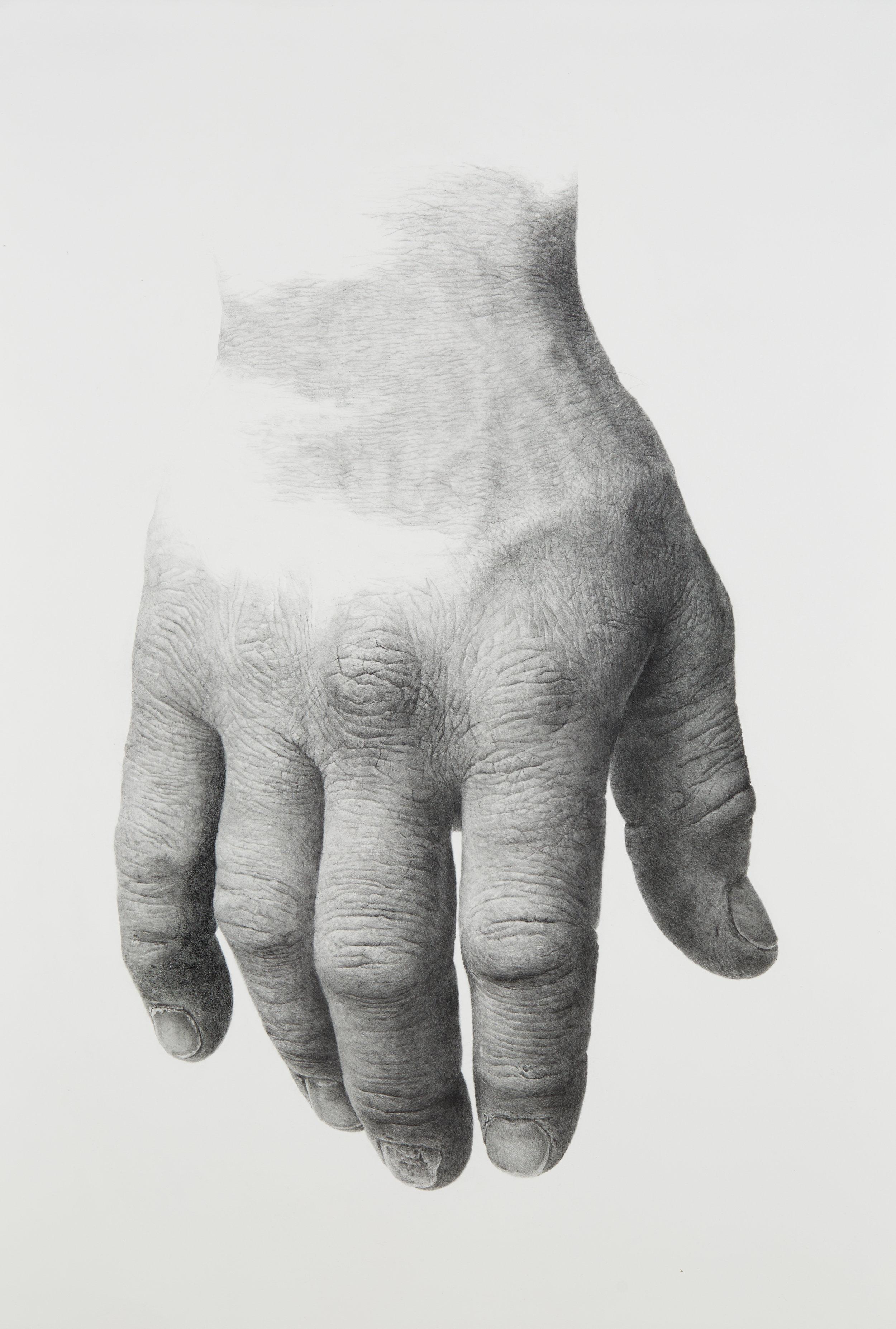 "30"" x 44"" graphite on paper"