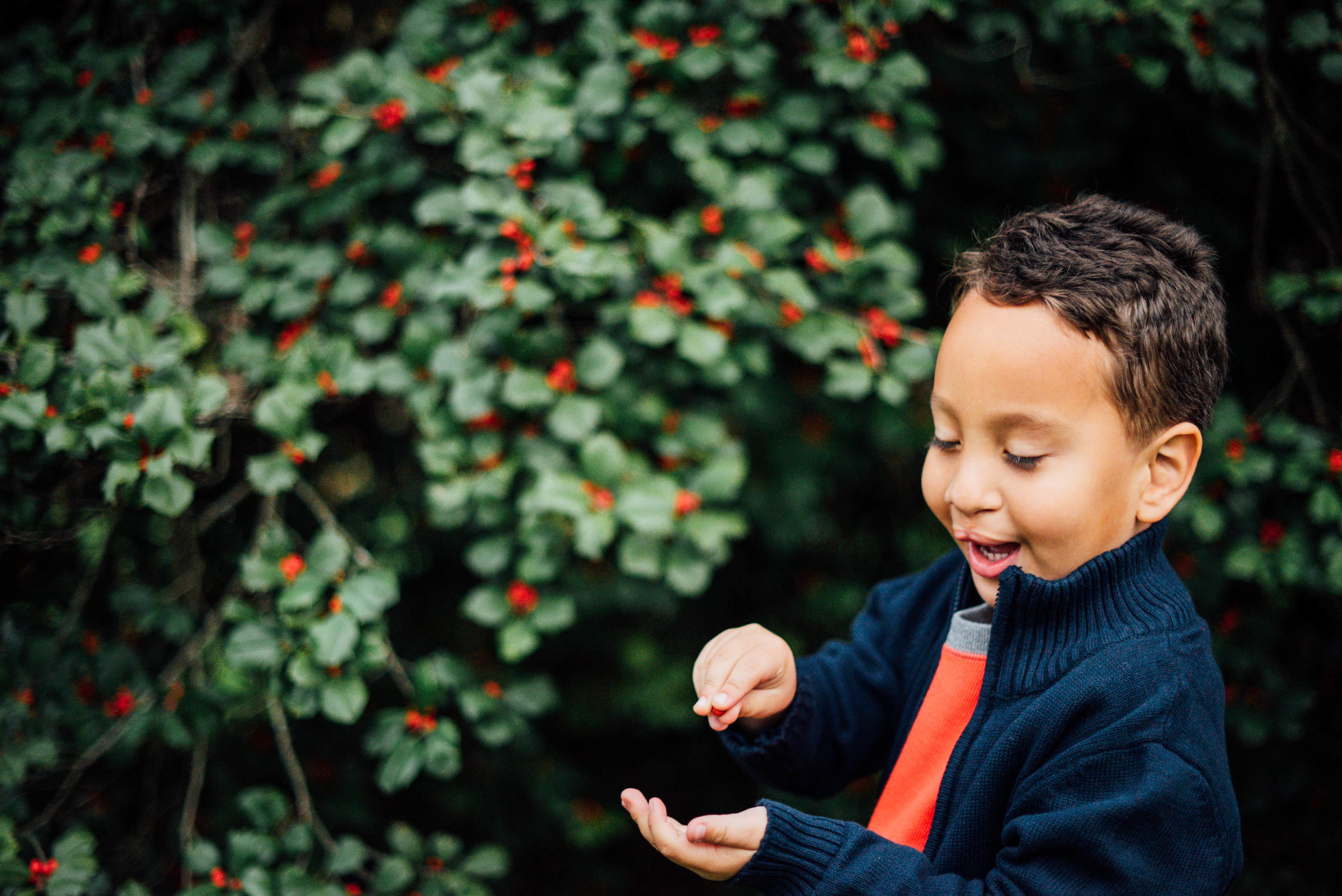 boy picking holly berries