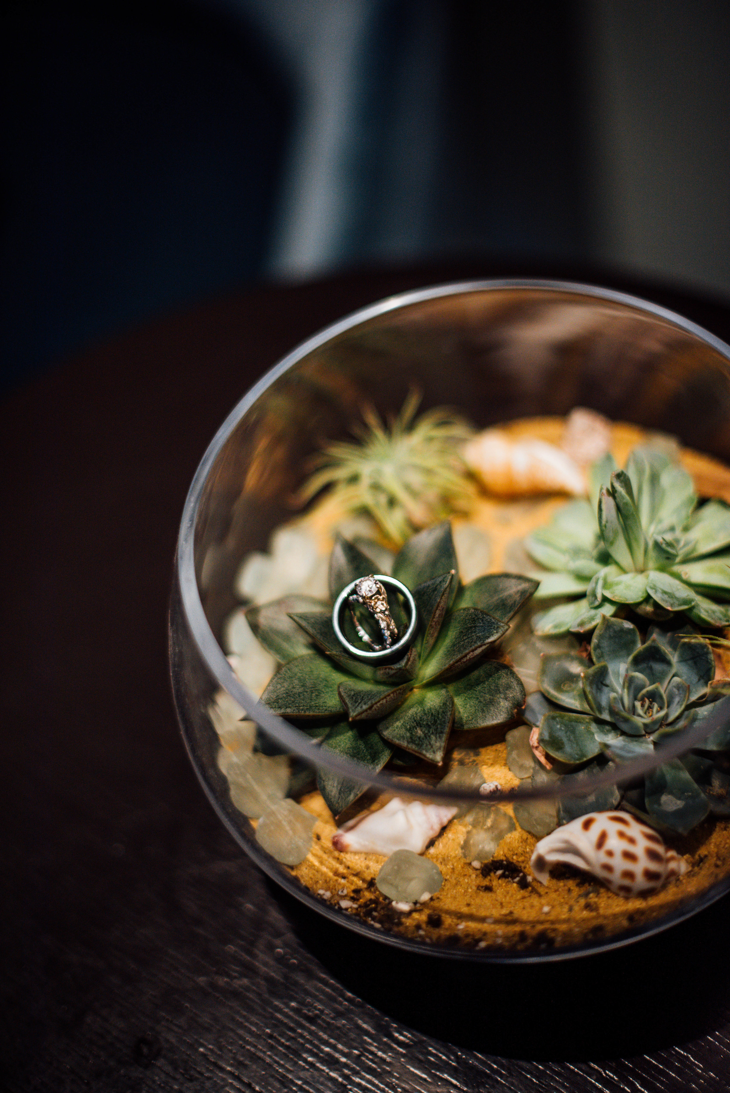 Succulent bowl with wedding rings at boutique hotel